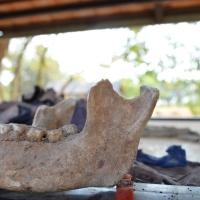 Choeung Ek:  The Killing Fields